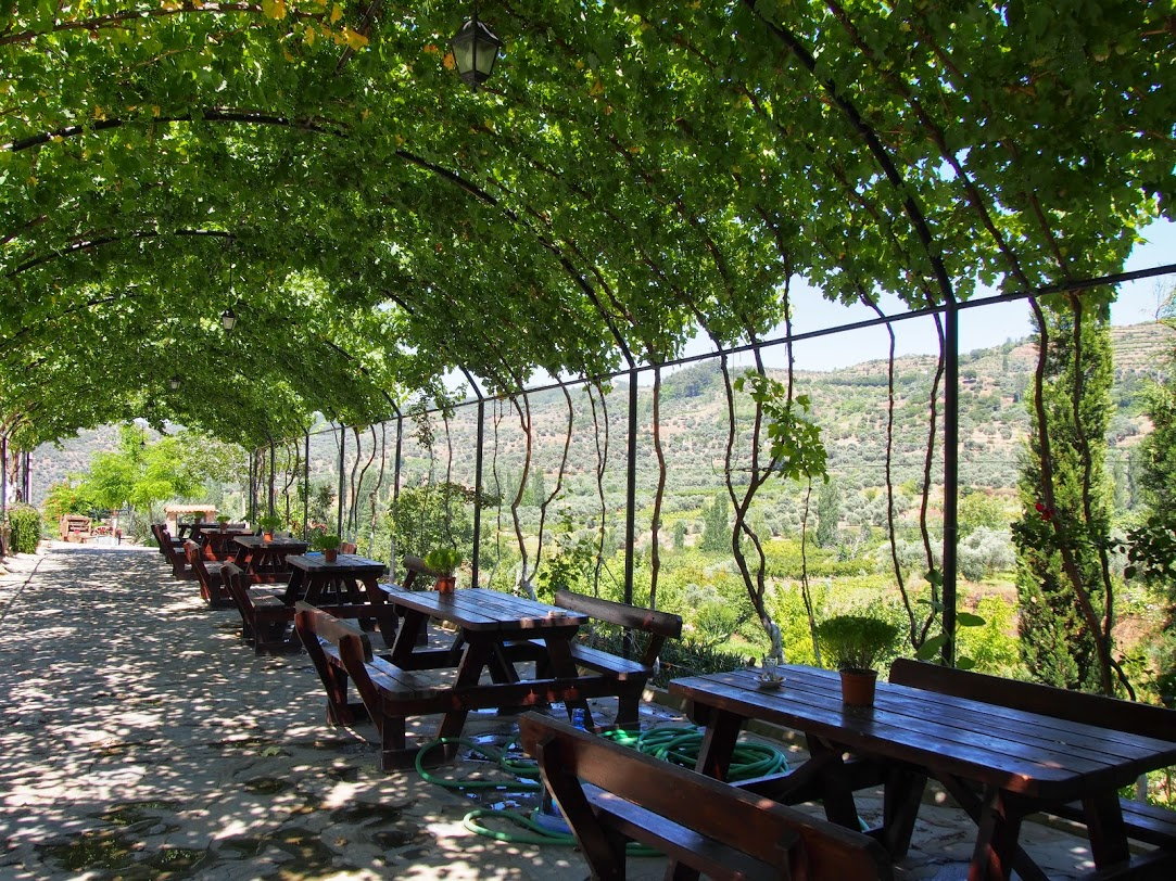 Arched Vines Around a Seating ARea