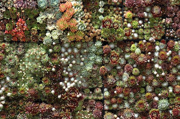 Incredible Succulent Garden Source Sunshineu0026Design