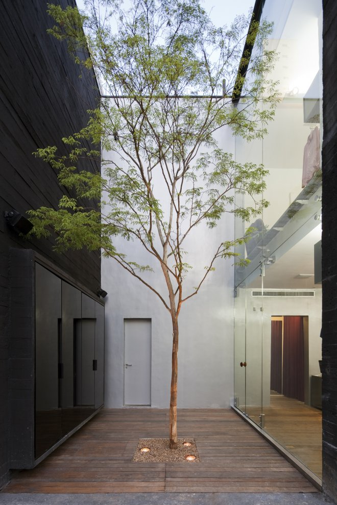 Tree in Narrow Internal Courtyard Source: Pinterest