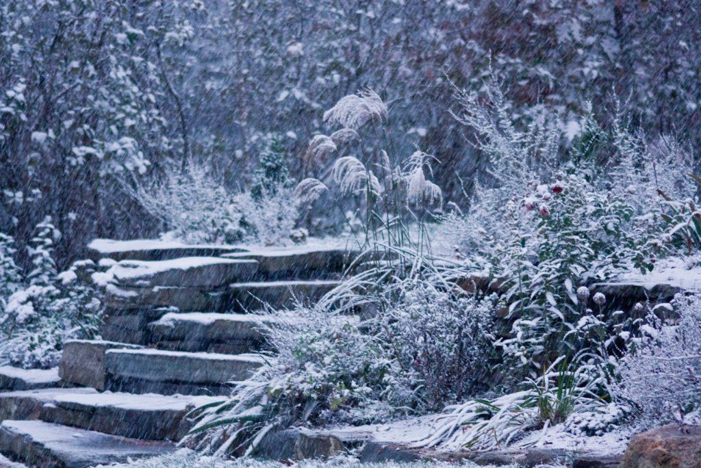 Winter Garden with Steps. Source: Ken's Kitchen Garden