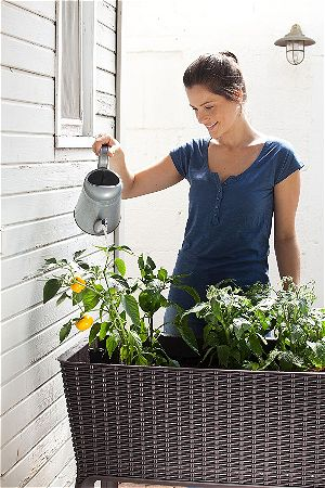 Keter Easy Grow Elevated Raised Garden Beds