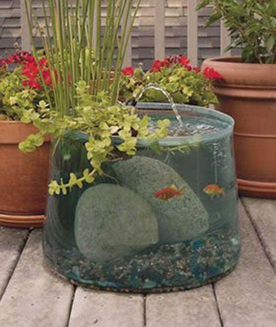 Backyard Aquarium