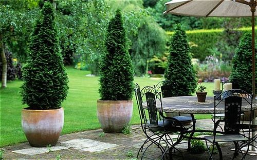 Italian Cypress, One Of The Best Patio Trees