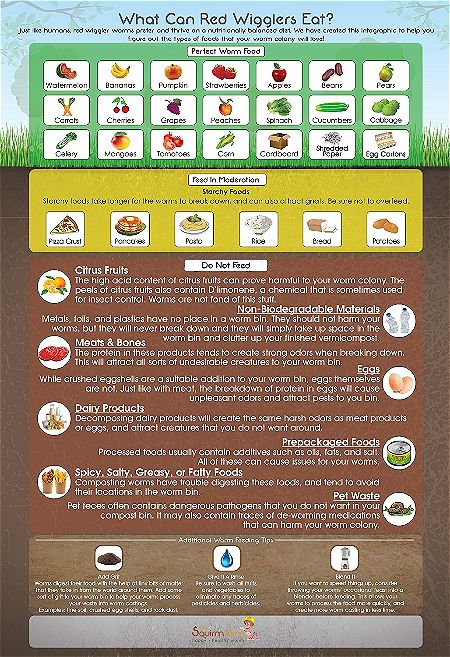 Worm Factory 360 Infographic Magnet