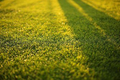 A Beautiful Lawn Source: Pexels