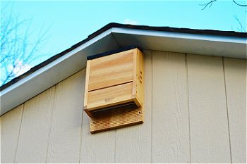 Nature-s Way Bird Products CWH6 Triple Chamber Cedar Bat House