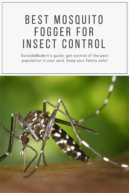 Best Mosquito Fogger For Controlling Insects | OutsideModern