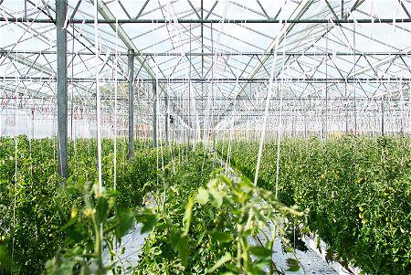 A Big Greenhouse