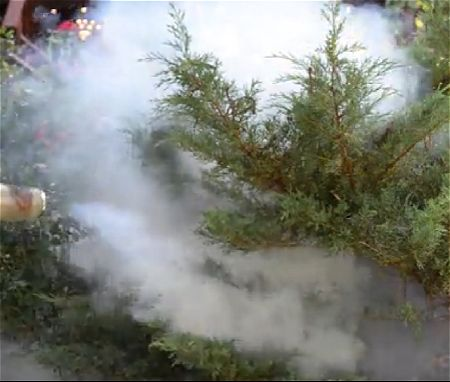 Insect Fogger Spraying