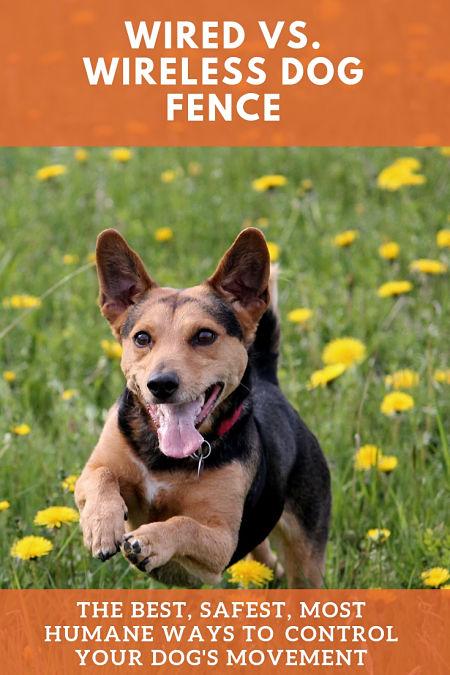 wired vs wireless dog fence