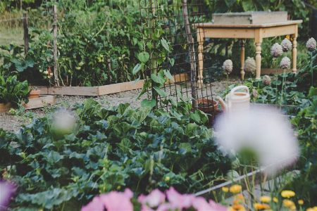 Beautiful Garden of Veggies