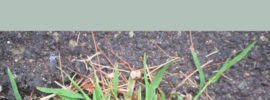 How to Kill Crabgrass Without Killing Other Plants