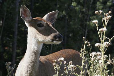 Keep Deer Away from Plants