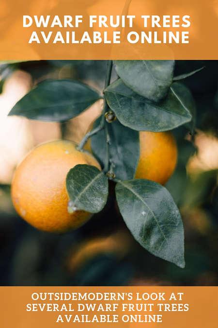 dwarf fruit trees for sale online