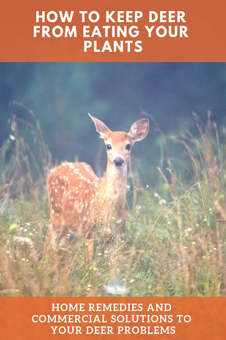 how to keep deer from eating your plants